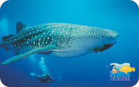 Project AWARE - Whale Shark Project